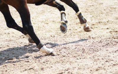 SWB-saluhästlista Falsterbo Horse Show