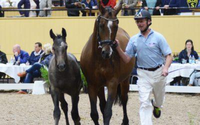 Hästförsäljning under Breeders Trophy!