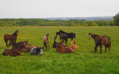 Hästnäringen kraftsamlar mot övergödningsutredningen