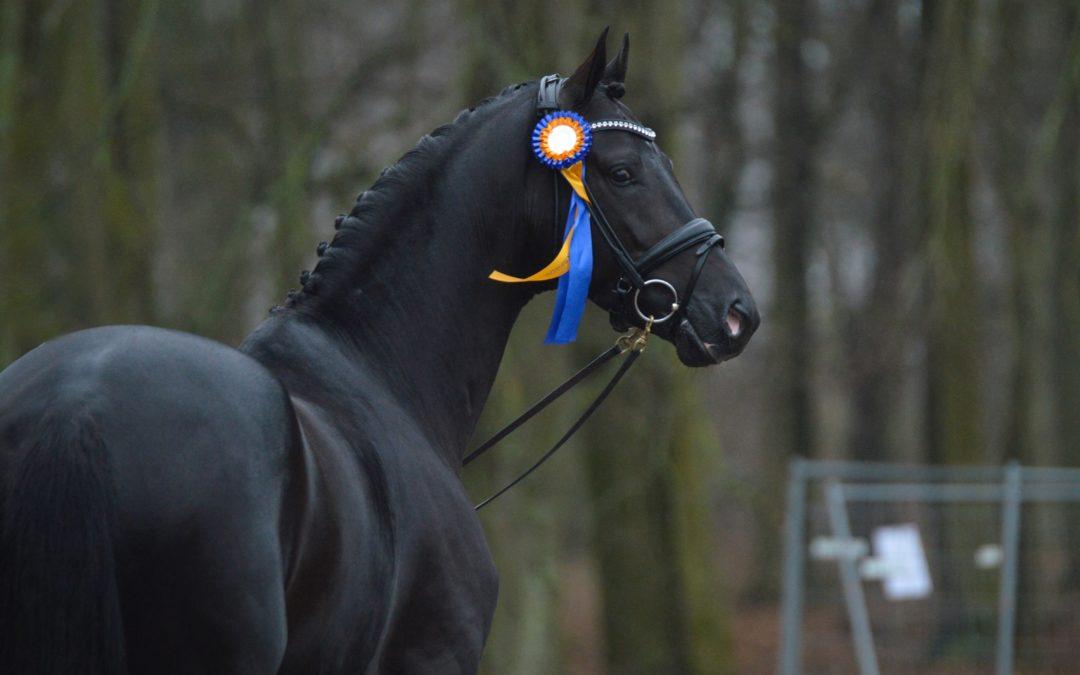 Samarbetsavtal med hästtransportföretag säkerställer tillgång till transportsperma i hela Sverige