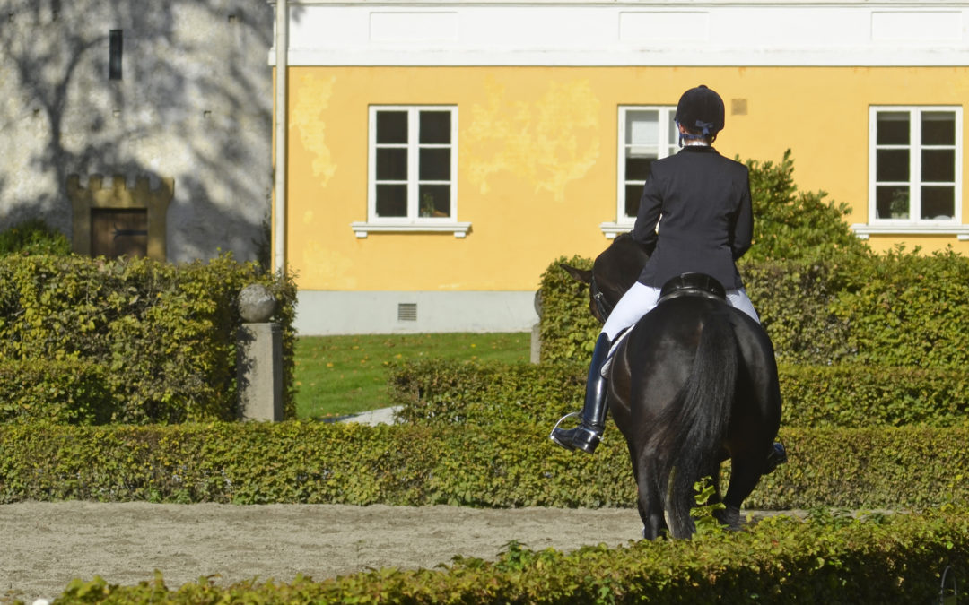 SWB-hästar till salu