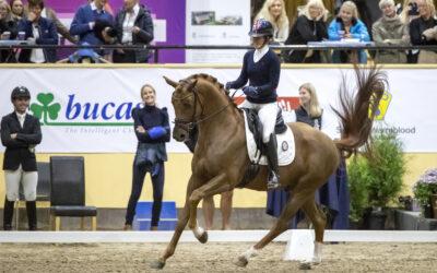 SWB köper Swede Horse