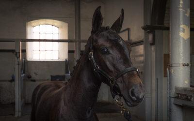 Kvalitetsmärkt hästverksamhet – nya möjligheter för hästföretagare