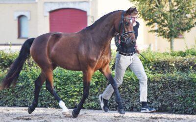 Onlineuktion för föl, unghästar och avelsston